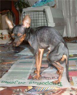 dogs_46.jpg