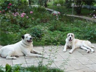 dogs_60.jpg
